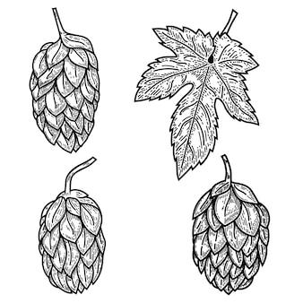 Conjunto de ilustraciones de lúpulo de cerveza en estilo grabado