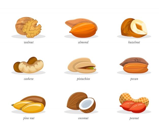Conjunto de ilustraciones de nueces