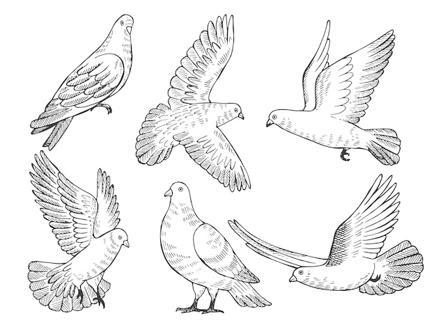 Conjunto de ilustraciones de palomas. cuadros dibujados a mano de aves aisladas.