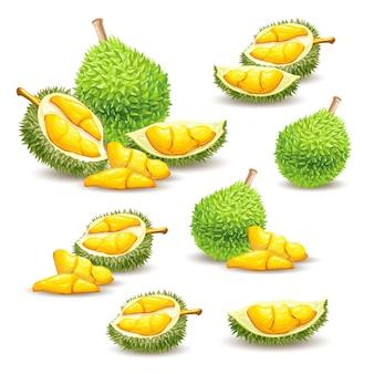 Conjunto de ilustraciones de vectores, iconos de una fruta durian