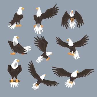Conjunto de imágenes de águila calva sobre fondo gris