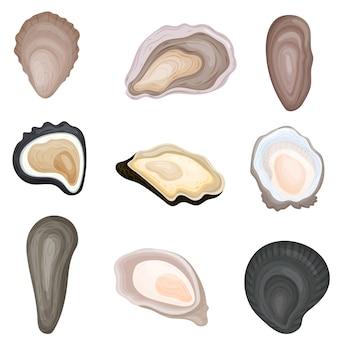 Conjunto de imágenes de ostras frescas en conchas.