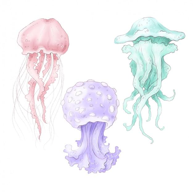 Conjunto de imágenes prediseñadas digital de medusas multicolores