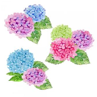 Conjunto de imágenes prediseñadas de ilustración de arreglos florales de hortensias acuarela