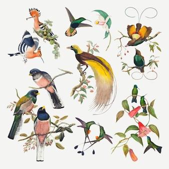 Conjunto de impresión de arte animal de vector de pájaro vintage, remezclado de colección de dominio público