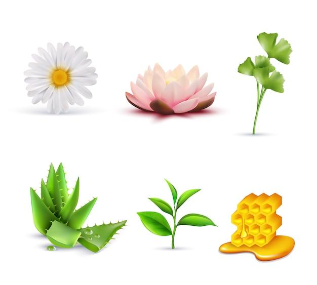 Conjunto de ingredientes cosméticos orgánicos