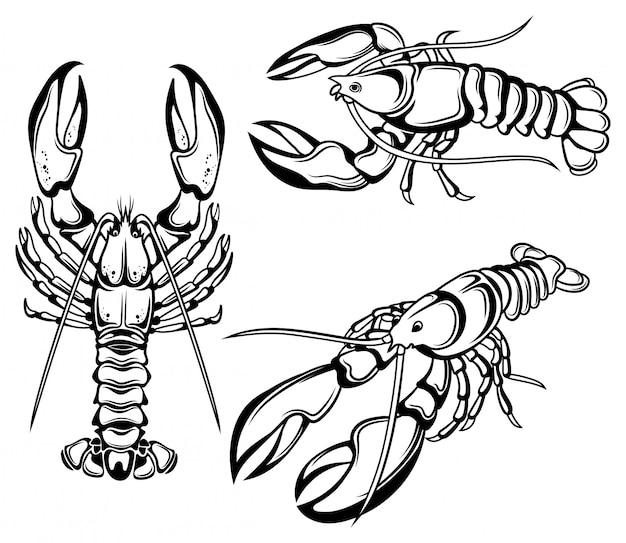 Conjunto de langostas. colección de crustáceos marinos. ilustración.