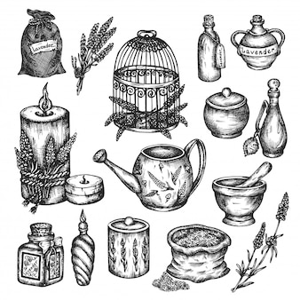 Conjunto de lavanda aislado en blanco dibujado a mano ilustración.