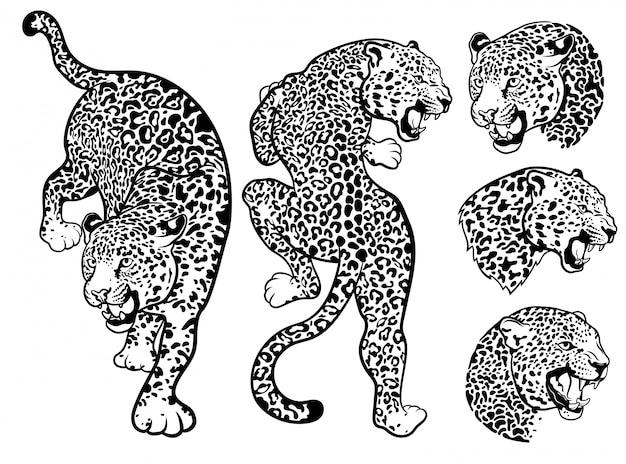 Conjunto de leopardos. colección de retratos de animales salvajes.