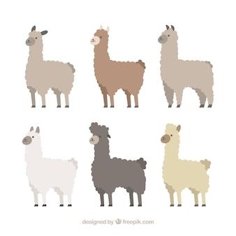 Conjunto de lindas alpacas