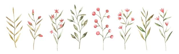 Conjunto de lindas ramitas y flores, ilustración botánica, diseño para niños, diseño de boda, decoración, diseño