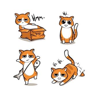 Conjunto lindo gatito