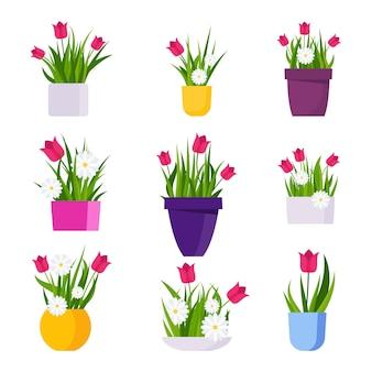Conjunto de macetas de colores brillantes con margaritas y tulipanes. ilustración de vector plano.
