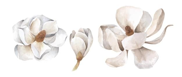 Conjunto de magnolia blanca. ilustración acuarela