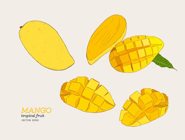 Conjunto de mangos