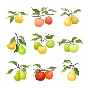 Conjunto de manzanas maduras y peras en las ramas