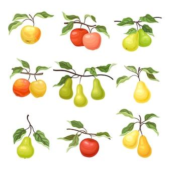 Conjunto de manzanas y peras en las ramas.