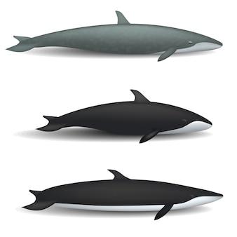 Conjunto de maqueta de pez ballena azul. ilustración realista de 3 maquetas de peces de cuento de ballena azul para web