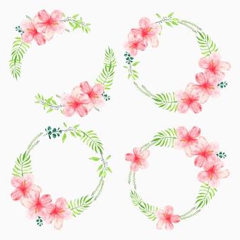 Conjunto de marco de círculo de flor de hibisco rosa acuarela