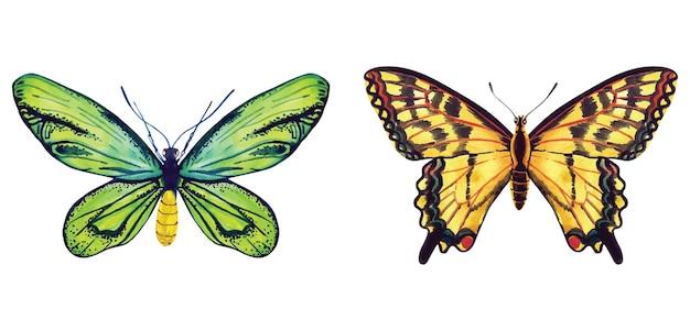 Conjunto de mariposas acuarela