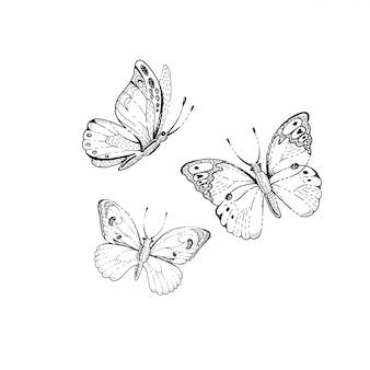 Conjunto de mariposas de bosquejo