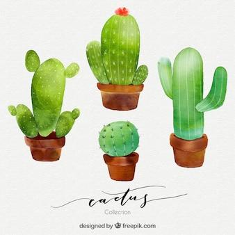 Conjunto moderno de cactus en acuarela