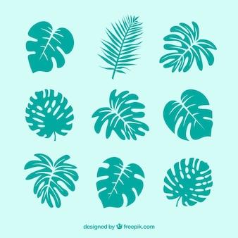 Conjunto moderno de hojas tropicales con diseño plano