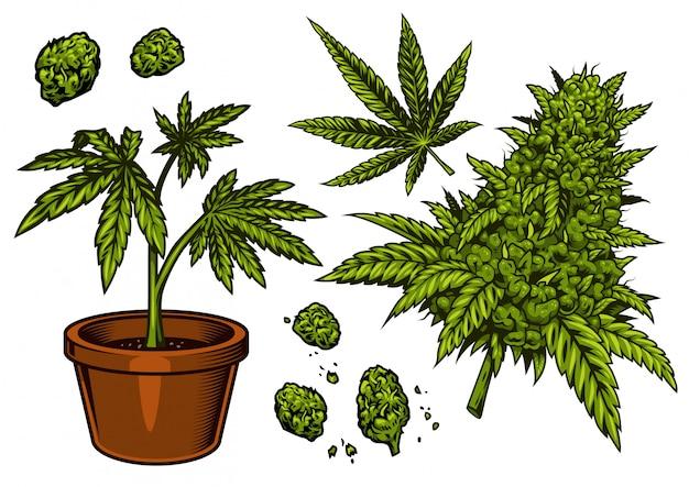 Conjunto de objetos de cannabis.