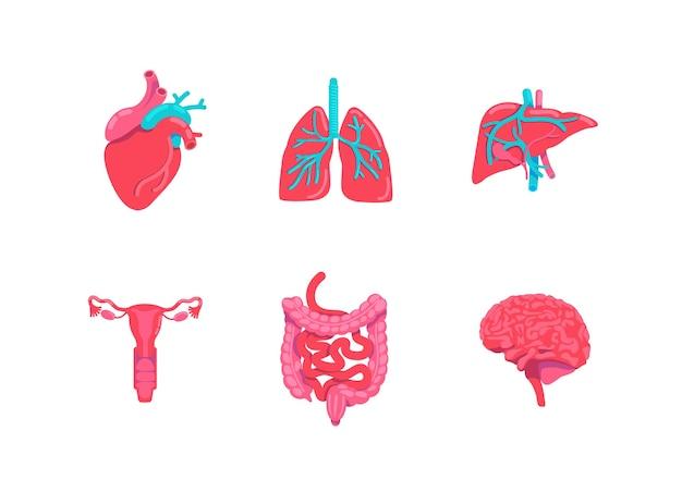 Conjunto de objetos de color plano de partes de anatomía del cuerpo humano. sistema digestivo. prevención de enfermedades respiratorias.