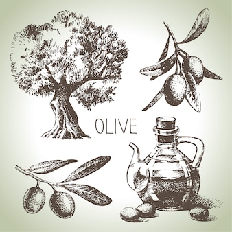 Conjunto de oliva dibujado a mano