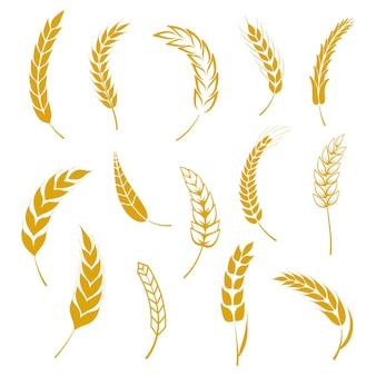 Conjunto de orejas de trigo vector gratuito