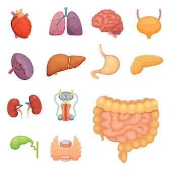 Conjunto de órganos humanos de dibujos animados. anatomía del cuerpo. ilustraciones del sistema reproductor, corazón, pulmones, cerebro.