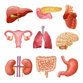 Conjunto de órganos humanos de dibujos animados
