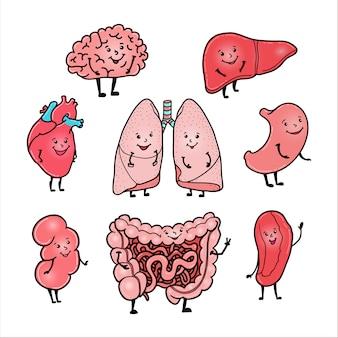 Conjunto de órganos humanos lindos y divertidos: cerebro, corazón, hígado, riñón, intestino, estómago, pulmones y bazo, estilo de dibujos animados