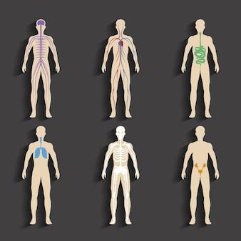Conjunto de órganos humanos y sistemas de vitalidad corporal. ilustración vectorial