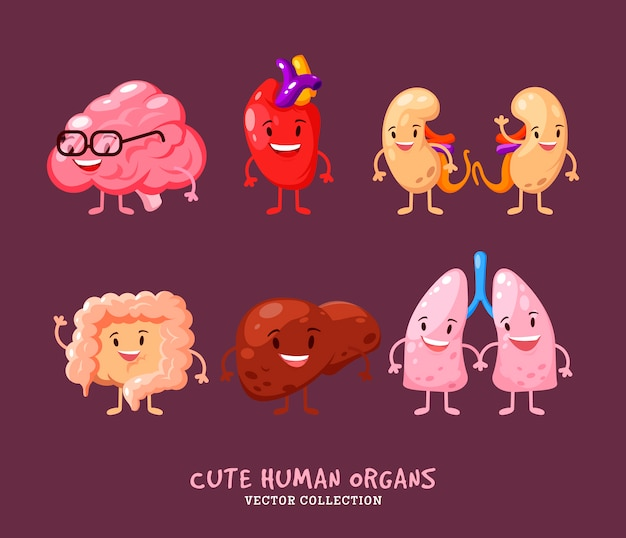 Conjunto de órganos internos humanos. riñones, hígado. corazón, cerebro y pulmones. con asas, patas y sonrisas. anatomía divertida de impresión.