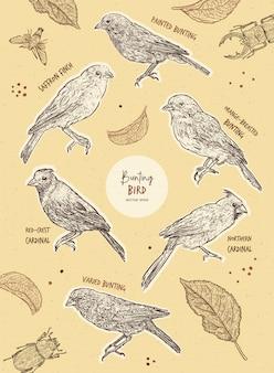 Conjunto de pájaro del empavesado, dibujar a mano boceto.
