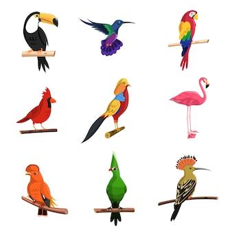 Conjunto de pájaros exóticos