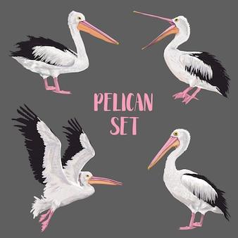 Conjunto de pájaros de pelícano. animales en la naturaleza