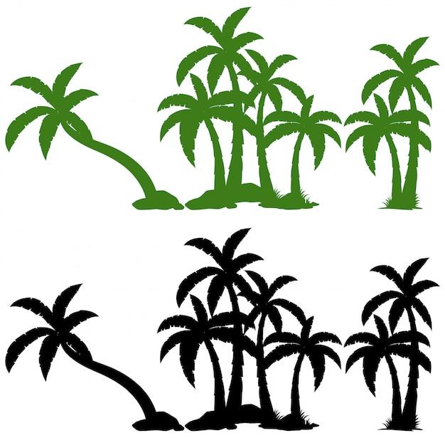 Conjunto de palmera