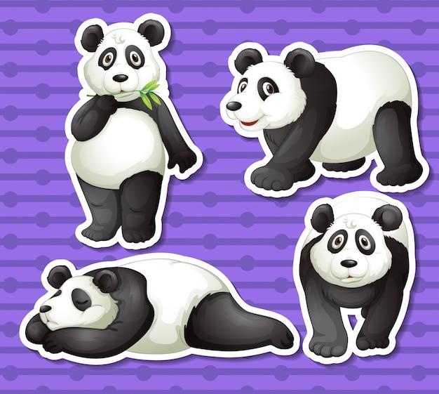 Conjunto de panda