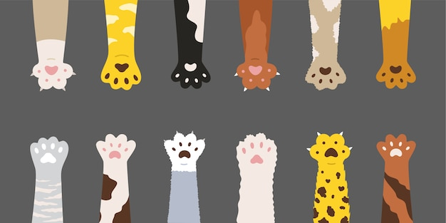 Conjunto de patas de gatos multicolores suaves