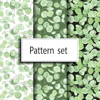 Conjunto de patrones florales de ramas de eucalipto transparente
