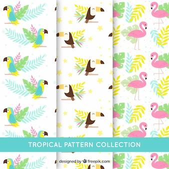 Conjunto de patrones tropicales con diferentes pájaros en estilo plano