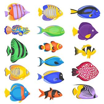 Conjunto de peces exóticos