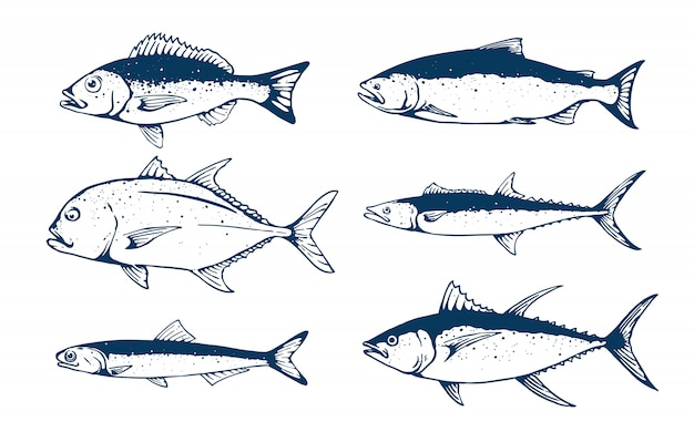 Conjunto de peces ilustración