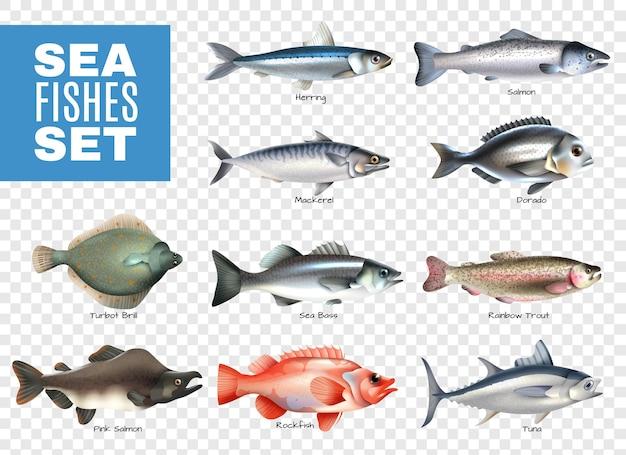 Conjunto de peces de mar con leyendas en transparente.