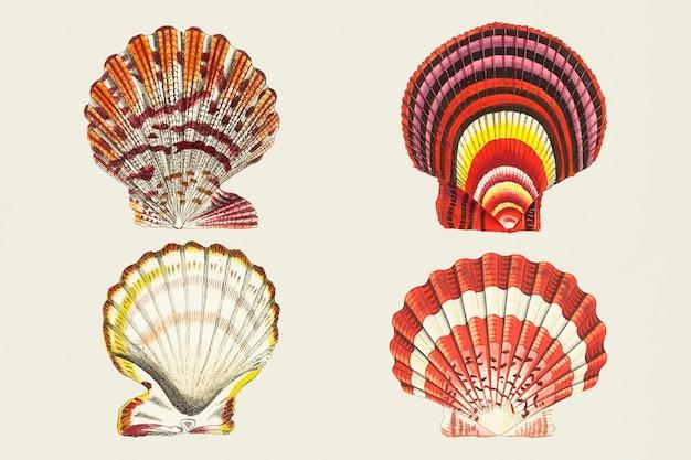 Conjunto de pegatinas de colores de vector de conchas marinas vintage