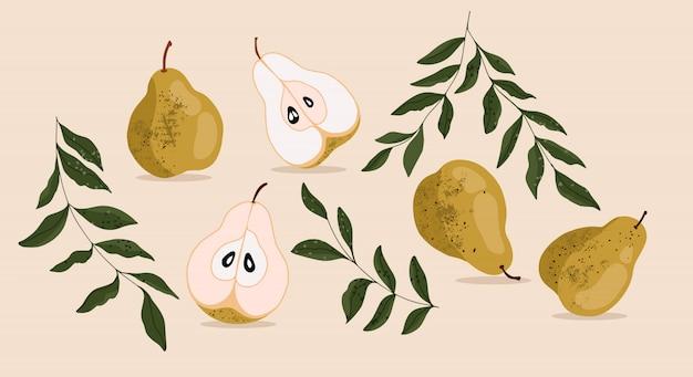 Conjunto de peras. colección de peras dibujadas a mano y ramas de los árboles. pera cortada por la mitad. ilustración realista de pera para tarjeta, banner, textil.