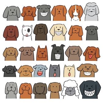 Conjunto de perro